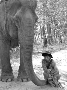 A happy elephant with his mahout