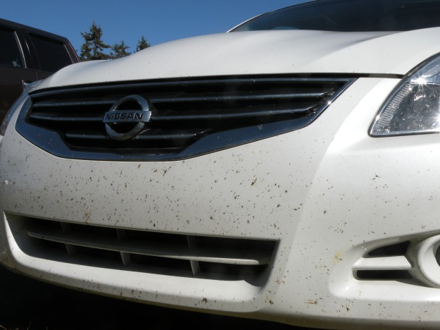 This is what 5,000 miles of dead bugs looks like