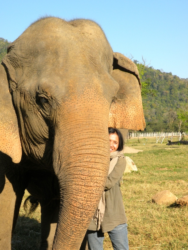 Lek Chailert, Founder of Elephant Nature Park
